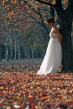 Beautiful young bride. Beautiful brunet bride in wedding dress standing by the tree Royalty Free Stock Photos