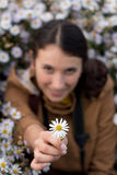 Beautiful young brunette girl gives a white flower, chamomile Royalty Free Stock Image