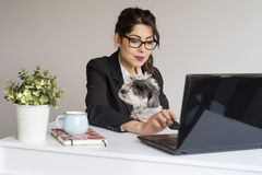 Beautiful young business woman working with her dog in office. Business woman working with a dog at office looking at laptop and smiling Royalty Free Stock Images