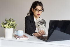 Beautiful young business woman working with her dog in office. Business woman working with a dog at office looking at laptop and smiling stock photography