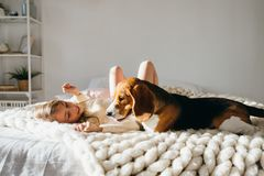 Beautiful young caucasian girl playing with her puppy beagle dog stock photos