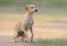 Beautiful young female dog. Jumping Stock Photos