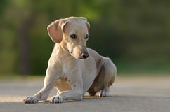 Beautiful young female dog. Outdoors Royalty Free Stock Image