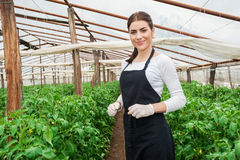 Beautiful young female gardener Royalty Free Stock Photos