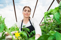 Beautiful young female gardener Stock Image