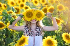Beautiful young on the field of sunflowers. Beautiful young girl enjoying nature on the field of sunflowers at sunset royalty free stock photography