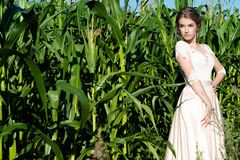 Beautiful young girl in beige dress in corn on field. Outdoors royalty free stock images