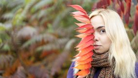 Half length portrait of young female in the autumn park with colorful leaves. The beautiful young girl with blonde hair in the purple coat in the autumn park royalty free stock image