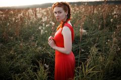Beautiful young girl in a field stock image