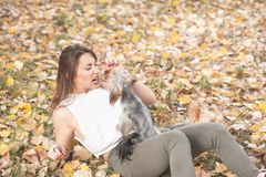 Beautiful young girl with her Yorkshire terrier dog puppy enjoying and playing in the autumn day in the park selective focus royalty free stock photography