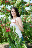 Beautiful young girl picking cherries Royalty Free Stock Image