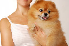 Beautiful young girl with pomeranian spitz dog on a white background. Stock Photos