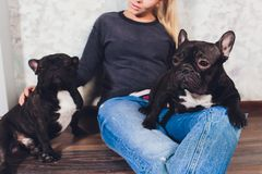 A beautiful young girl sits and holds a lot of small puppy of a French bulldog dog. stock photo