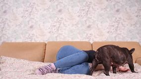 A beautiful young girl sits and holds a lot of small puppy of a French bulldog dog. A beautiful young girl sits and holds a lot of small puppy of a French stock footage