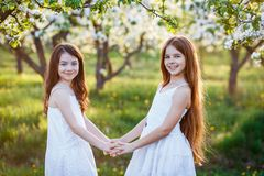 Beautiful Young Girls In White Dresses In The Garden With Apple Trees Blosoming At The Sunset. Two Friends Hugging Stock Image