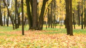 Beautiful young Korean girl playing with autumn leaves stock footage