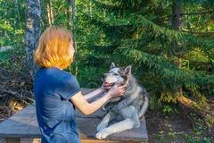 Beautiful young lady with her adorable cute dog of siberian hasky breed in summer forest at sunset. Happy teenage girl and pet. stock photo