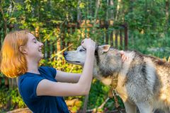 Beautiful young lady with her adorable cute dog of siberian hasky breed in summer forest at sunset. Happy teenage girl and pet. royalty free stock images