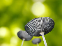 Beautiful young mushroom or toadstool against green background Royalty Free Stock Photos