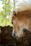 Beautiful young pony. Royalty Free Stock Image