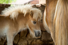 Beautiful young pony. Royalty Free Stock Photo