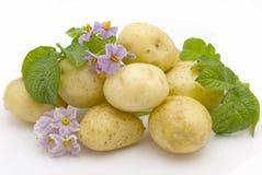 Beautiful Young Potato Stock Photo