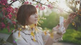 Beautiful young red-haired woman among cherry blossom sakura tree spring pink flowers making selfie on smartphone on sunset. In Odessa stock footage