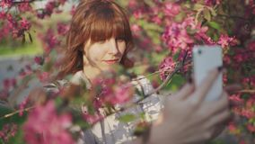 Beautiful young red-haired woman among cherry blossom sakura tree spring pink flowers making selfie on smartphone on sunset. In Odessa stock video footage