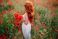 Beautiful young red-haired woman in poppy field holding a bouquet of poppies. Beautiful young woman in poppy field holding a bouquet of poppies, summer Royalty Free Stock Images