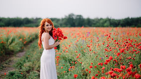 Beautiful young red-haired woman in poppy field holding a bouquet of poppies. Beautiful young woman in poppy field holding a bouquet of poppies, summer Stock Photo