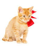 Beautiful young redhead kitty Royalty Free Stock Images