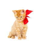 Beautiful young redhead kitty Royalty Free Stock Image