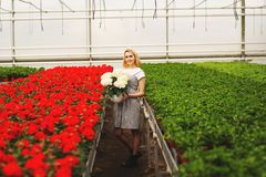 Beautiful young smiling girl in dress, worker with flowers in greenhouse. Girl holds white flowers royalty free stock photos