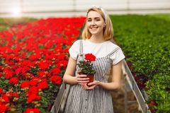 Beautiful young smiling girl, worker with flowers in greenhouse. Concept work in the greenhouse, flowers. Copy space royalty free stock photography