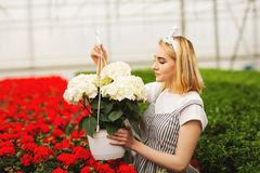 Beautiful young smiling girl, worker with flowers in greenhouse. Concept work in the greenhouse, flowers. Copy space royalty free stock photos