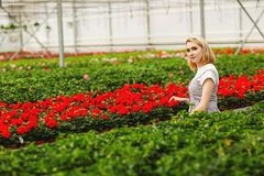 Beautiful young smiling girl, worker with flowers in greenhouse. Concept work in the greenhouse, flowers. Copy space royalty free stock photo