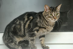 Beautiful young tabby cat  Stock Photo