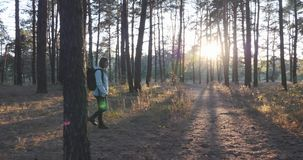 Beautiful young tourist girl in bright blue jacket with big black backpack walking through fall forest at sunset. Sun rays breakin stock video footage