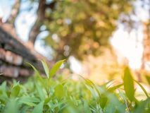 Beautiful young trees with sunlight in the garden stock photography