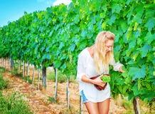 Beautiful young winemaker Stock Photo