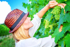 Beautiful young winemaker Stock Image