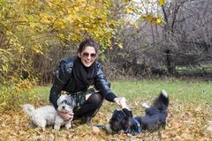 Beautiful young Woman with her Dogs in the Park. Beautiful young woman in the autumn park with her dog stock photo