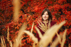Beautiful young woman. Autumn portrait. Beautiful young woman in the red sweater on a background of red leaves royalty free stock photography