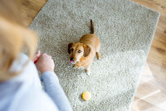Beautiful young woman with dog playing at home. Royalty Free Stock Photos