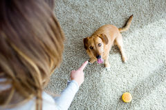 Beautiful young woman with dog playing at home. Stock Photography