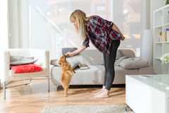 Beautiful young woman with dog playing at home. Stock Photos