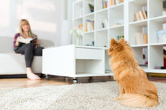 Beautiful young woman with dog relaxing at home. Royalty Free Stock Photos