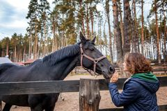 Beautiful young woman is feeding horse with hands Stock Image