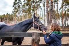 Beautiful young woman is feeding horse with hands Stock Photos