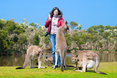 Beautiful young woman feeding kangaroos. In Phillip Island Wildlife Park, Australia Royalty Free Stock Images